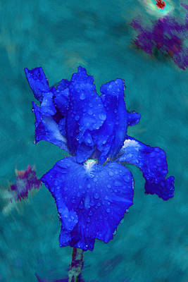 Royal Blue Iris Print by Viktor Savchenko