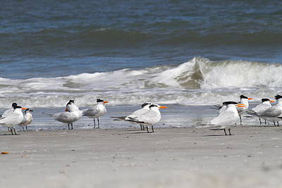 Tide Photograph - Royal Terns 8 by Cathy Lindsey