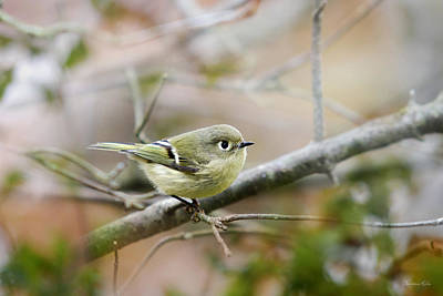 Warbler Photograph - Ruby-crowned Kinglet by Christina Rollo