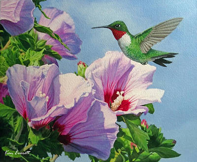 Ruby-throated Hummingbird Print by Ken Everett