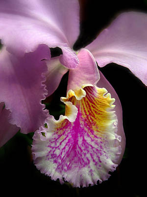 Orchid Digital Art - Ruffled by Jessica Jenney