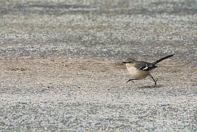 Mockingbird Photograph - Run Toward Your Dreams by Jai Johnson