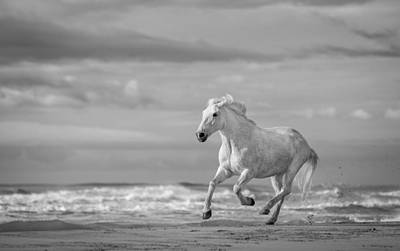 Anger Photograph - Run White Horses Viii by Tim Booth