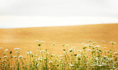 Landscape Photograph - Run With Me Through A Field Of Wild Flowers by Artist and Photographer Laura Wrede