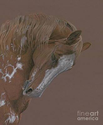 Pinto Drawing - Rune by Laura Klassen