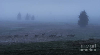 Morning Photograph - Running In The Mist by Yuri Santin