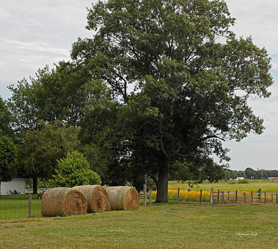 Indiana Landscapes Photograph - Rural Indiana Scenic - Carroll County by Suzanne Gaff