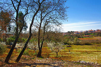 Spring Photograph - Rural Landscape by Carlos Caetano