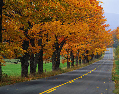 Rural Road In Autumn Print by Panoramic Images