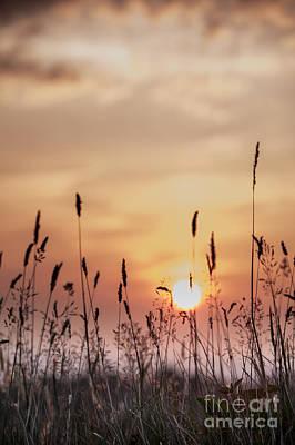Rural Sunset Print by Jan Bickerton