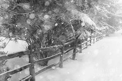 Monochrome Photograph - Rural Winter Scene With Fence by Elena Elisseeva