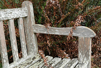Woods Photograph - Rustic Bench At Butchart Gardens In Victoria by Rob Huntley