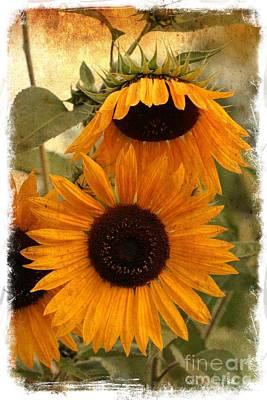 Sunflowers Photograph - Rustic Sunflowers by Carol Groenen
