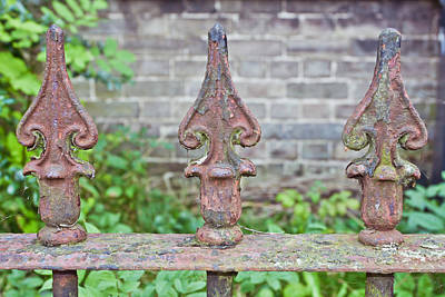 Rusty Fence Spikes Print by Tom Gowanlock