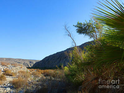 S A F  Palm Springs Five Print by Tina M Wenger