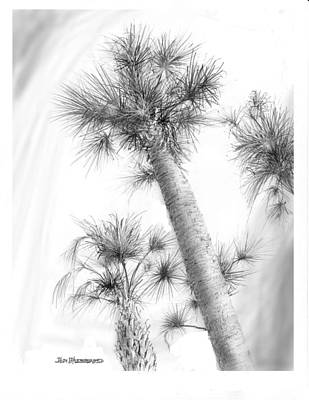 Cabbage Drawing - Sabal Cabbage Palm by Jim Hubbard