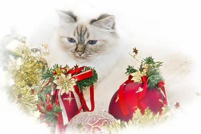 Snout Digital Art - Sacred Cat Of Burma Christmas Time II by Melanie Viola