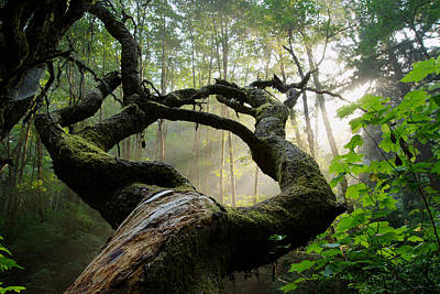 Beautiful Photograph - Sacred Forest by Dustin  LeFevre