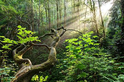 California Redwood Photograph - Sacred Grove by Dustin  LeFevre