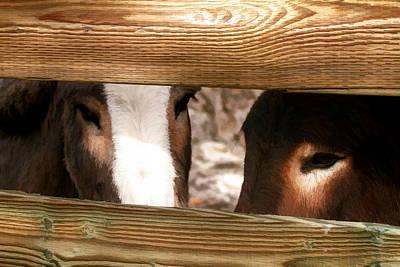 Donkey Photograph - Sad Eyes by Donna Kennedy