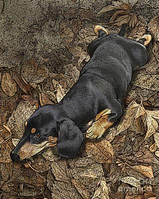 Dachshund Digital Art - Sad Murphy by Judy Wood