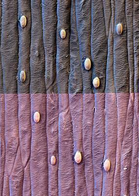 Saffron Flower Surface Print by Stefan Diller