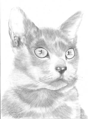 Blue And Grey Drawing - Saffy by Sandra Muirhead