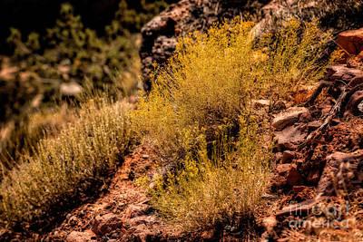 Sage Original by Jon Burch Photography