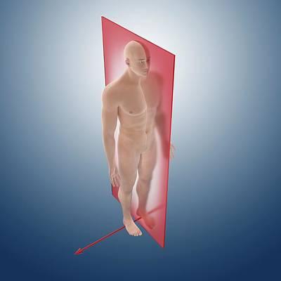 Dexter Photograph - Sagittal Anatomical Orientation Plane by Springer Medizin