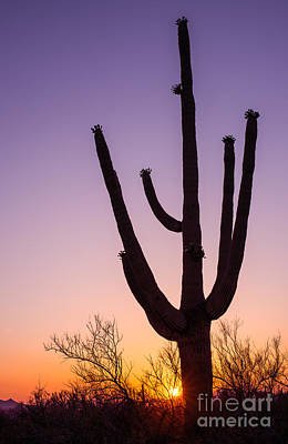Desert Photograph - Saguaro At Sunset by Tod and Cynthia Grubbs