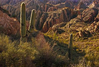 Mountain Photograph - Saguaro Cactus Hills by Dave Dilli