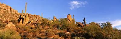 Saguaro Cactus, Sonoran Desert Print by Panoramic Images