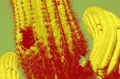 Sonora Painting - Saguaro Celebration I by Carolina Liechtenstein