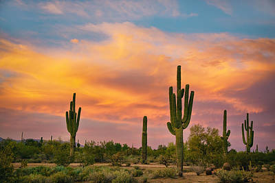 Phoenix Photograph - Saguaro Desert Life by James BO  Insogna