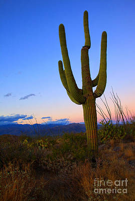 Saguaro Dusk Original by Mike  Dawson