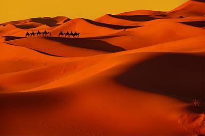 Camel Photograph - Sahara Story by Midori Chan