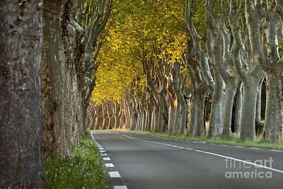 Saint Remy Trees Print by Brian Jannsen