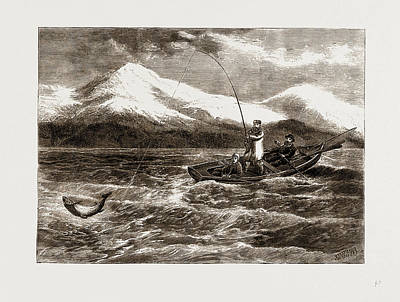 Salmon Drawing - Salmon Fishing In Loch Tay by Litz Collection