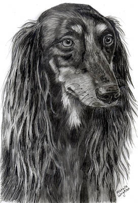 Saluki Black And White Drawing Print by Michelle Wrighton