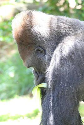 San Photograph - San Diego Zoo - 1212359 by DC Photographer