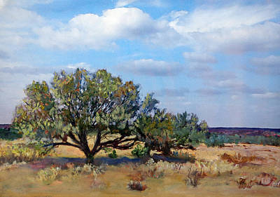 Cowboy Painting - San Pedro Mesquite by Toyah Taylor