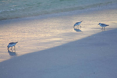 Bowmans Beach Photograph - Sanderlings At Dusk I  by Steven Ainsworth