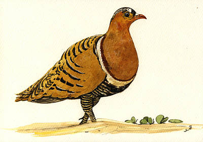 India Wildlife Painting - Sandgrouse by Juan  Bosco