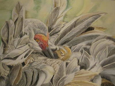 Sandhill Crane And Chick Print by Teresa Smith