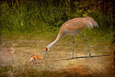 Crane Mixed Media - Sandhill Crane Mother And Baby by Peggy Collins