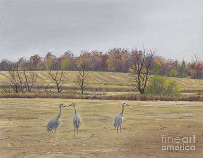 Sandhill Cranes Feeding In Field  Print by Jymme Golden