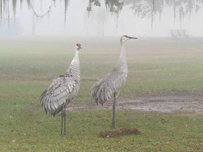 Sandhill Cranes In A Foggy Morning Print by Zina Stromberg