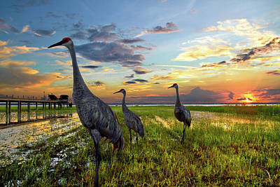 Sandhill Sunset Print by Debra and Dave Vanderlaan