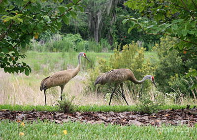 Sandhill Crane Photograph - Sandhills Through The Crepe Myrtles by Carol Groenen