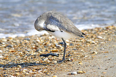 Seabird Photograph - Sandpiper by Betsy C Knapp